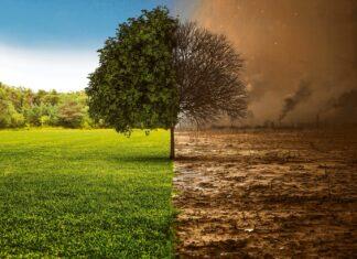 Klima Strategie Agrana